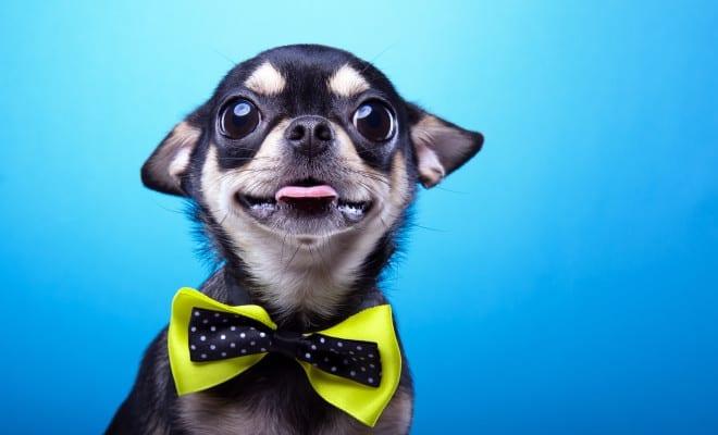 Las mascotas más tiernas del internet