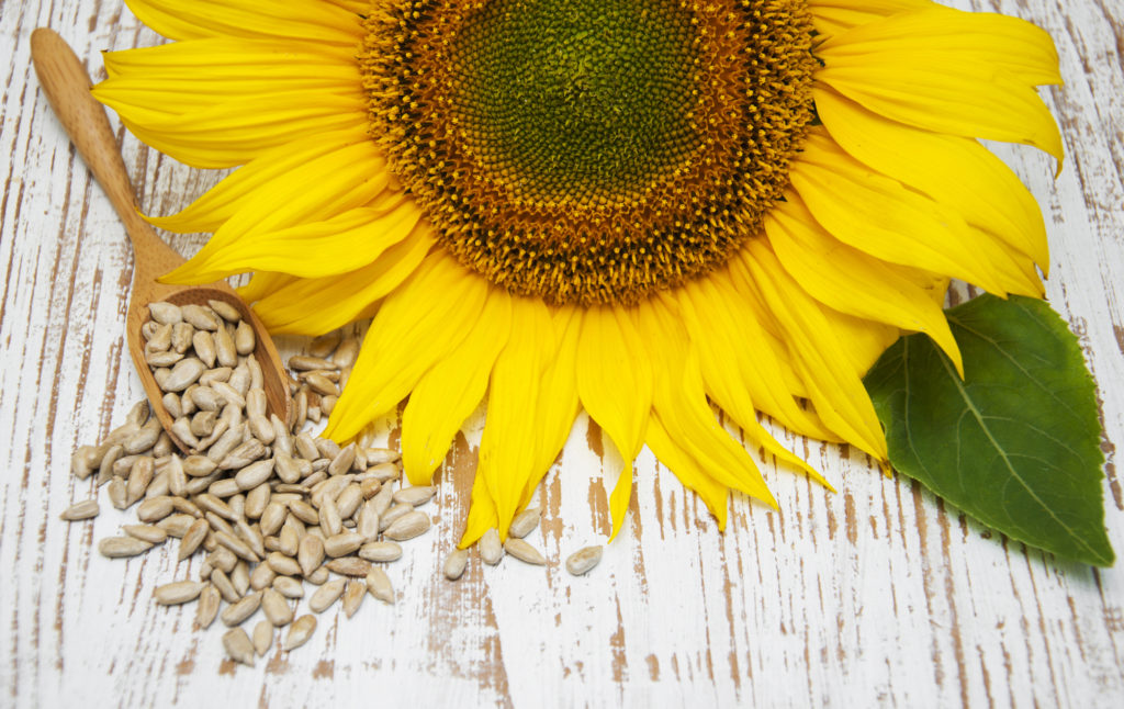 Sunflower with Seeds on a wooden background