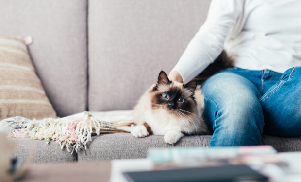 Woman relaxing on the sofa at home and cuddling her beautiful long hair cat