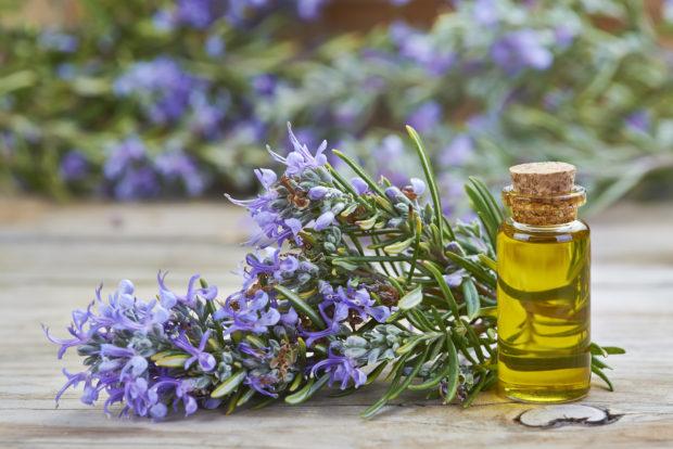 Aceite esencial de romero para uso cosmtico y medicinal