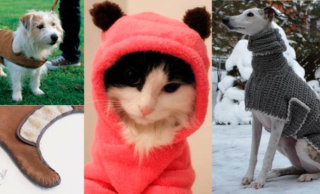 Los mejores abrigos para tu mascota
