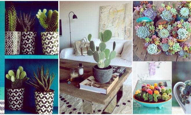Tener cactus en tu casa es una excelente idea, te cuento por qué