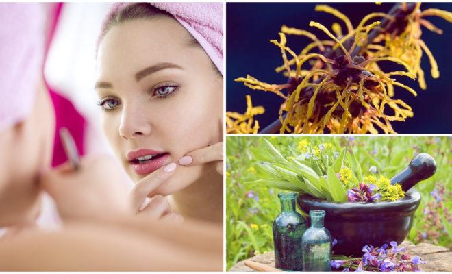 Mejora la circulación de tu piel usando avellana de bruja