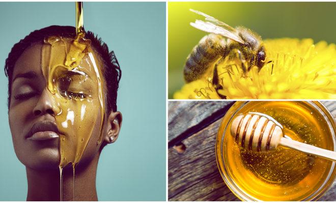 El maravilloso poder de las abejas y los productos de miel