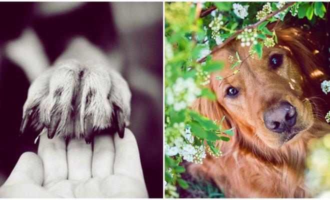 Perder una mascota duele lo mismo que perder a un familiar o amigo