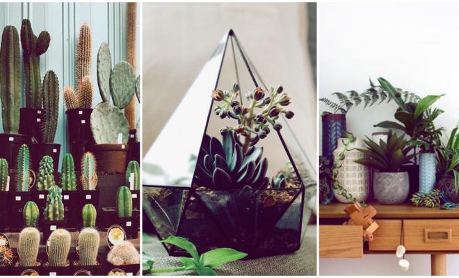 Ideas para decorar tu hogar con plantas