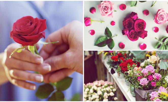 Significado de las rosas de acuerdo a su color, ¿cuál te ha dado tu novio?