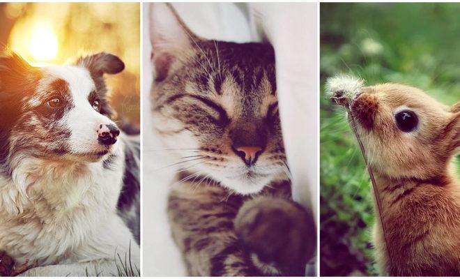 Cómo elegir a una mascota según tu estilo de vida