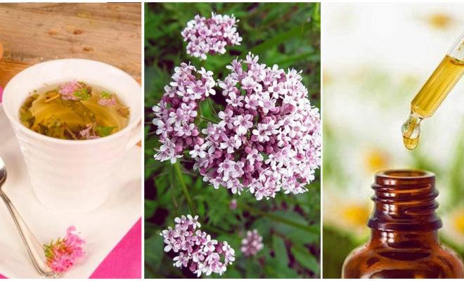 Remedios naturales: valeriana para calmar la ansiedad