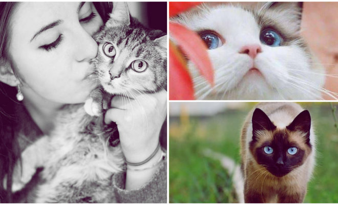 Razones por las que un gato es la mejor compañía