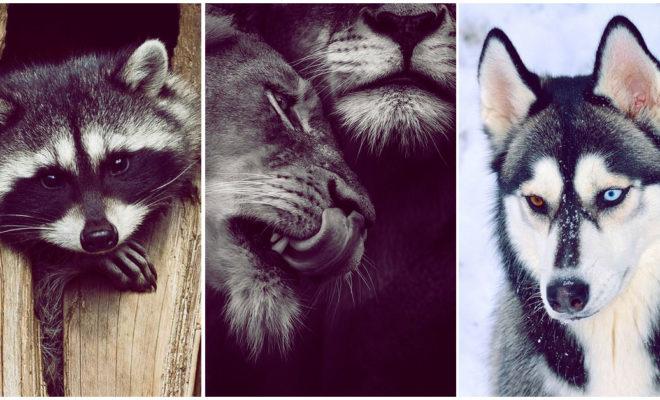 ¿Sabes qué animal te representa en la cama?