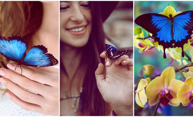 Aplica la leyenda de la mariposa azul a tu vida y obtén maravillosos resultados