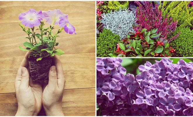 Plantas que decorarán tu jardín como el de una casa elegante