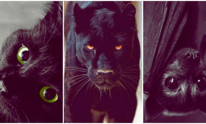 Revela tu lado oscuro eligiendo alguno de estos animales, ¿te atreves?