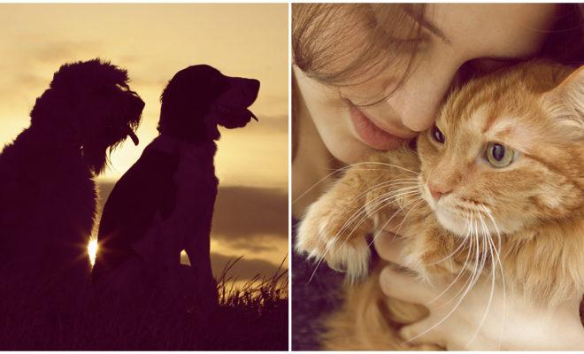 La gran satisfacción de rescatar animales, ¿la has sentido?