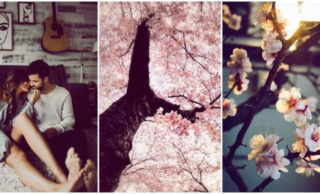 La leyenda del árbol de Sakura; una historia de amor que te va a encantar