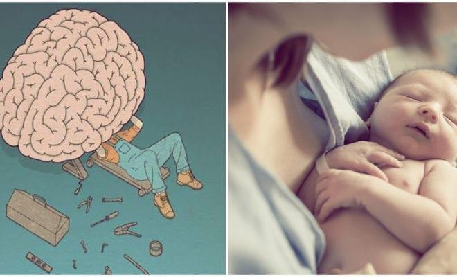 Así cambia tu cerebro con la maternidad