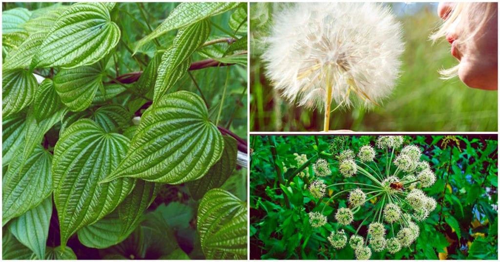 Estas son las plantas que aumentan la fertilidad