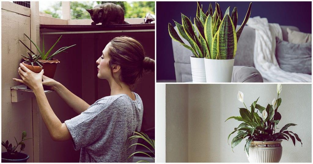 Plantitas que te ayudarán a tener un hogar saludable