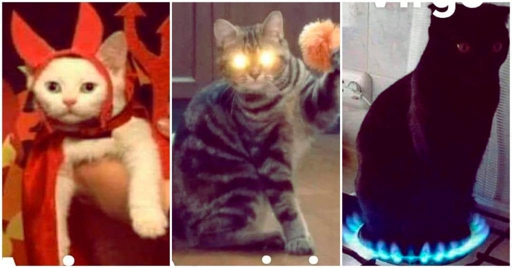 Qué gatito eres según tu signo zodiacal