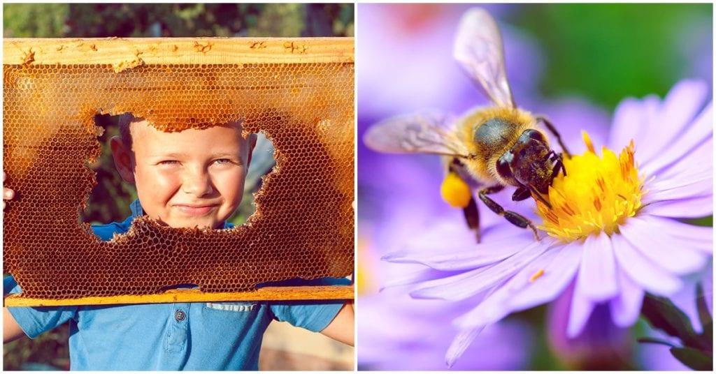 La importancia de salvar a las abejas 🐝❤️