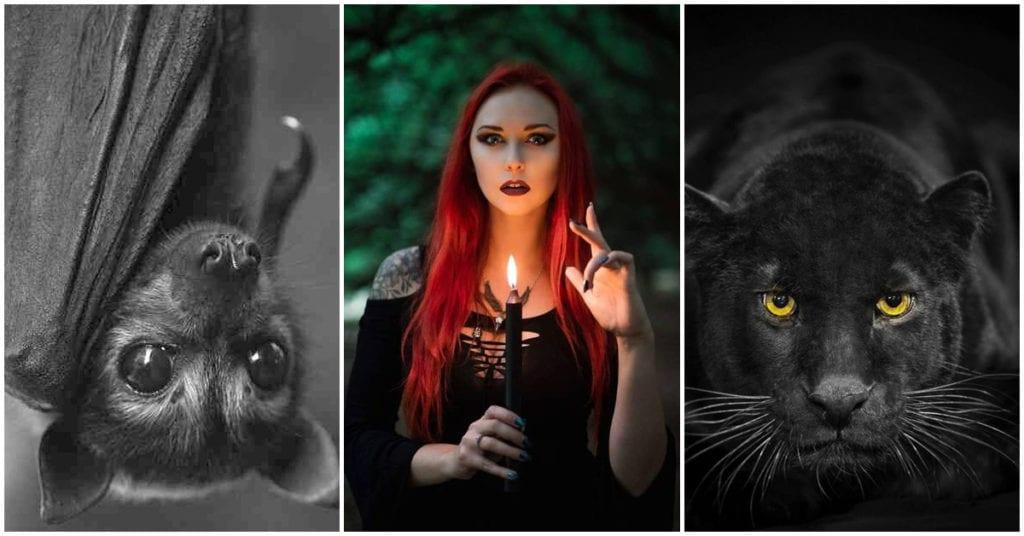 Escoge un animal y te diré algo de tu lado oscuro