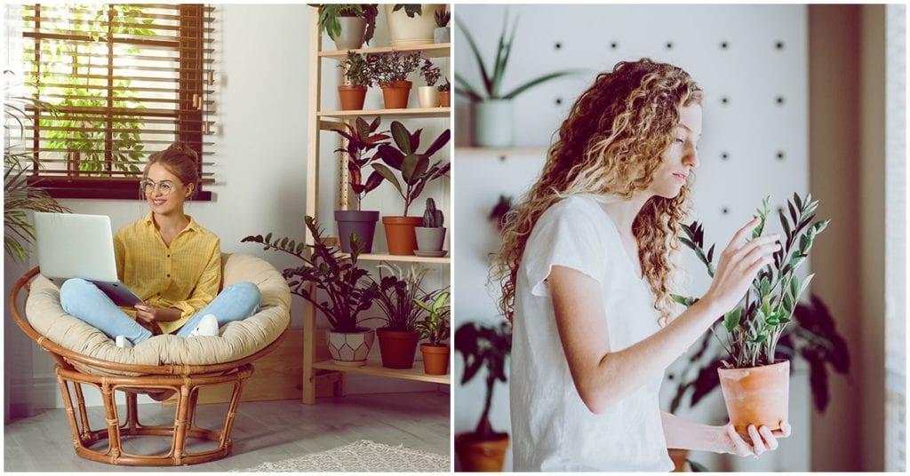 7 plantas que le dan vitalidad a tu hogar