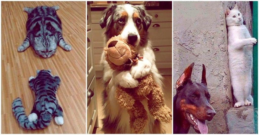 Cosas graciosas que hacen nuestras mascotas para pasar desapercibidas