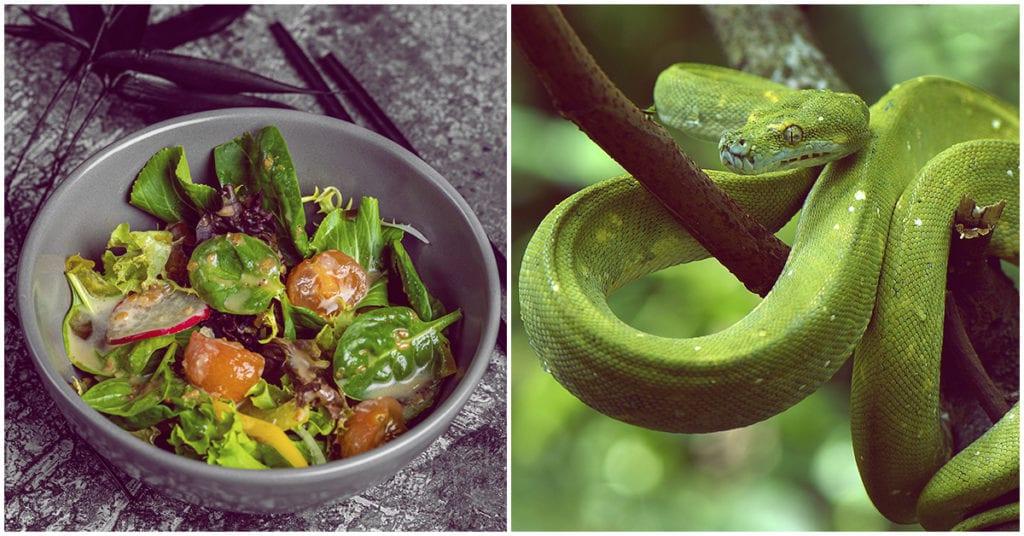 Lo que opinan los expertos de la dieta de la serpiente