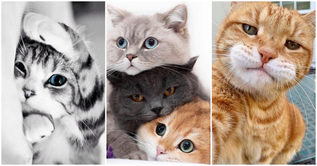 Si tu gato estornuda, tal vez sea porque…