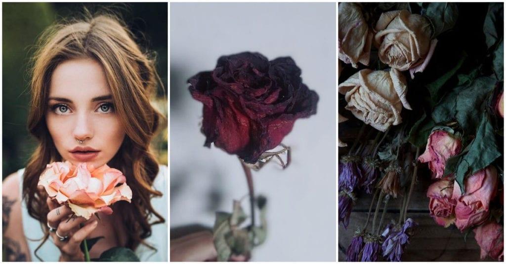 Cómo disecar una rosa para que te dure toda una vida