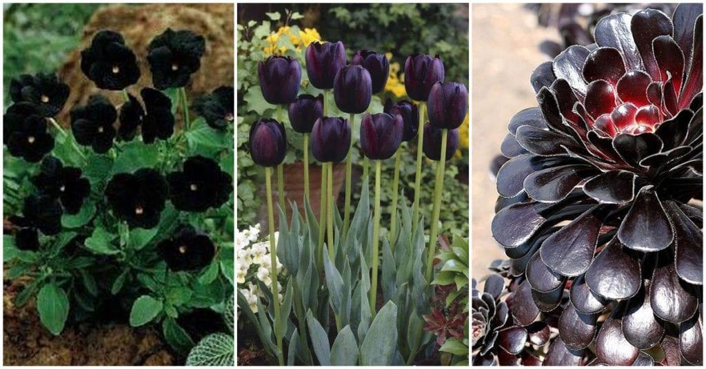Plantas negras que le darán mucho estilo a tu casa