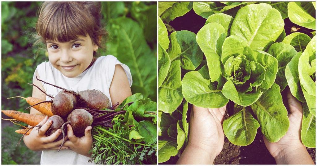 Verduras que puedes cultivar en la comodidad de tu casa