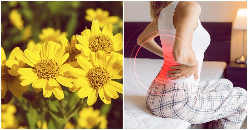 Cómo solucionar tus problemas de espalda en un dos por tres