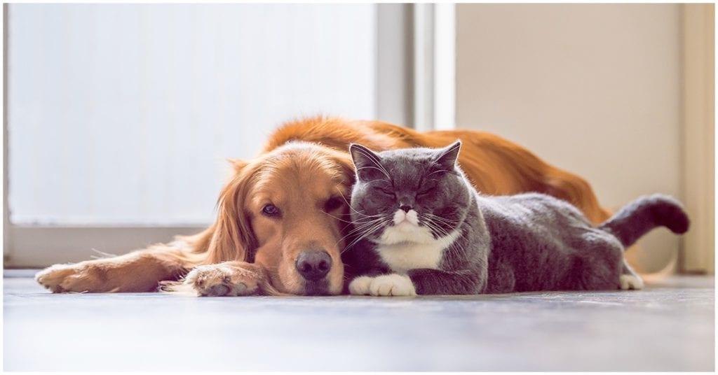 Misión espiritual de nuestras mascotas, ¡te sorprenderá!