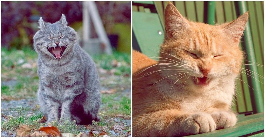 Ésta es la razón por la que estornudan tus gatos